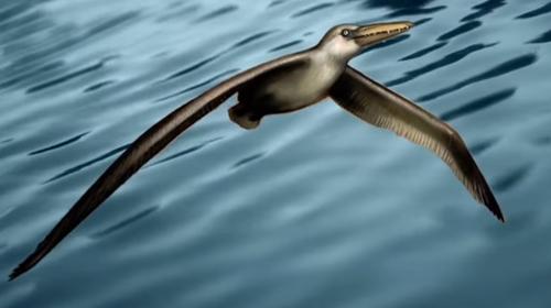OiseauPrehistorique500